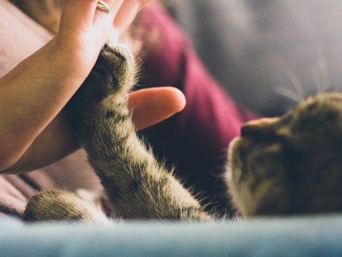 Pet General Insurance Personal Insurance